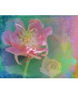 Flower Children Art Photograph 24 x 30 Giclee M... - $150.00