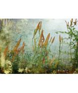 Magic Spell Fine Art Photograph 24 x 30 Lillies... - $150.00
