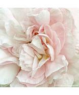 Blush Rose Gallery Wrap Canvas 30 x 30  White P... - $695.00