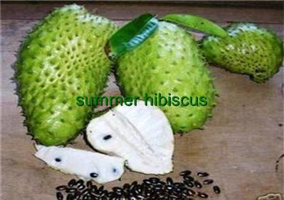 Soursop_2