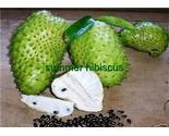 Soursop_2_thumb155_crop
