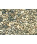 Sea Shell Craft Tiny Shells Lot 1 - $16.99