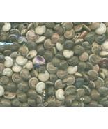 Sea Shell Craft Tiny Shells Lot 2 - $16.99