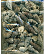 Sea Shell Craft Small Shells Lot  2 - $6.02