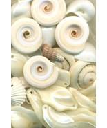 Sea Shell Pendant Mix - $6.02