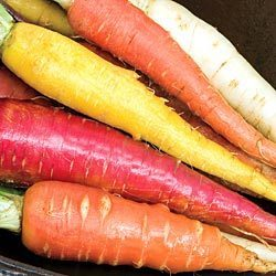 CARROT SEEDS - 100 RAINBOW BLEND FRESH CARROT SEEDS VEGETABLE SEEDS