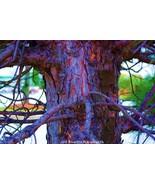 Bleu' Bark Fantasy Fine Art Photograph 24 x 36 ... - $495.00