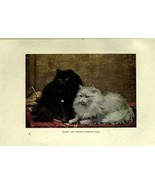 mammals-00122 - BLACK AND WHITE PERSIAN CATS - $3.99