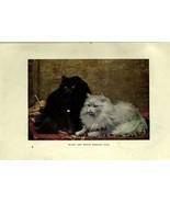 mammals-00122 - BLACK AND WHITE PERSIAN CATS - $3.99