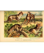 cats-00071 - Persian Lynx, Caracal, Canadian Ly... - $3.99