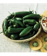HOT JALAPENO PEPPER SEEDS - 20 FRESH SEEDS - $1.49