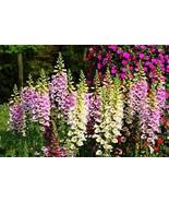 FOXGLOVE SEEDS 100 FRESH FOX GLOVE SEED FREE SH... - $1.49
