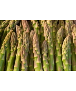 MARY WASHINGTON ASPARAGUS SEEDS - FRESH 25 SEED... - $1.49
