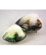 Vintage ceramic clam shell salt pepper shaker s... - $15.00