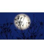 HAUNTED FULL COVEN MAY 21ST FULL FLOWER MOON MA... - $87.77