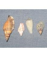 Random Lot of Assorted Sea Shells x4 Seashells ... - $4.00