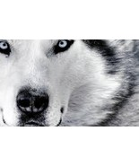 WOLF SPIRIT THOR EXTREME POWERFUL SPELL FOR COM... - $170.00