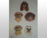 Buy Set of 5 Dog Refridgerator Magnets bn