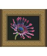 African Daisy, Cross Stitch Pattern - $27.00