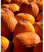 506 PUMPKIN Recipes Collection eBook-Great 4 Ho... - $1.49