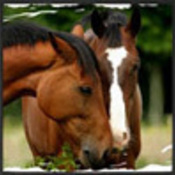 Horse_log22222_thumb175