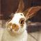 Bunny_20pic_1__thumb48