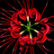Photoshop_flower_thumb48