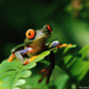Froggy_pic_for_desktop_thumb128