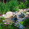 Water_pond_thumb48