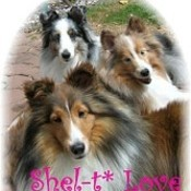 Sheltielove_thumb175