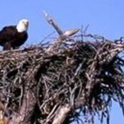 Eagles_nest_thumb175