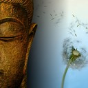 Buddha-wallpapers-photos-pictures-dandelion_thumb128