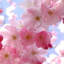 Spring_1_thumb128