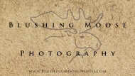 Blushing Moose Photography