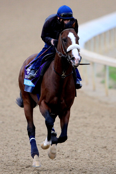 LOUISVILLE, KY - NOVEMBER 03: Union Rags, trained by Miochael Matz, on the track during the morning exercise session in preparation for the Breeders' Cup at Churchill Downs on November 3, 2011 in Louisville, Kentucky.  (Photo by Matthew Stockman/Getty Images)