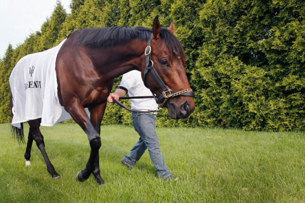 BALTIMORE, MD - MAY 16:  Kentucky Derby winner Orb grazes following a workout in preparation for the 138th Preakness Stakes at Pimlico Race Course on May 16, 2013 in Baltimore, Maryland.  (Photo by Rob Carr/Getty Images)