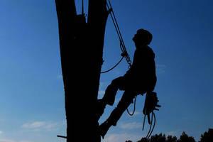 Tree service 1059484 960 720
