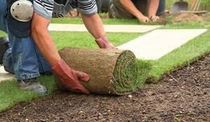 Turf grass sod