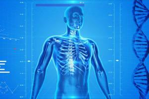 Human skeleton 163715 960 720