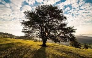 Tree 338211 1280