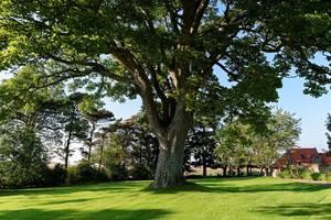 Tree 970850 1280