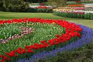 Tulips 21947 1920