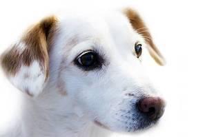 Dog 72333 640