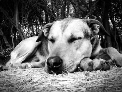 Dog-57528_640