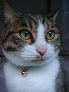 Cat-66988_640