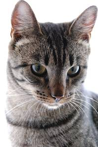Cat-55587_640