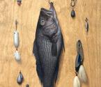 Hanging Bass