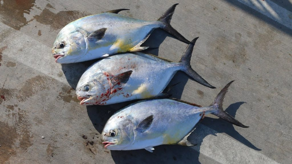 This Might PISS People Off!!! Eating A PRIZED Fish! (Permit)- Catch Clean Cook