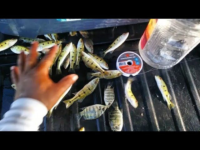 Homemade Plastic Bottle Fish Trap using MCDONALD'S French Fries! Micro Fishing