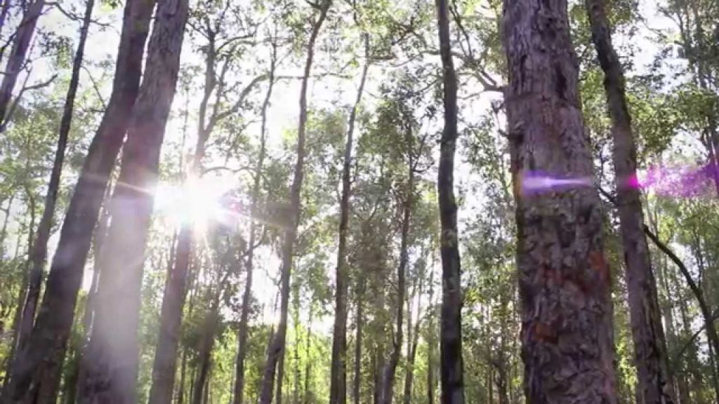 Nature Play WA Introduction to Camping Ep. 1 – Campsite Selection